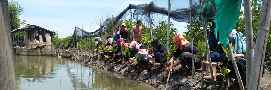 Mangrove Time Hadirkan Tiga Komunitas Lingkungan