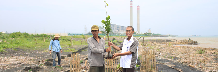 IKAMaT dan PLN Tanjung Jati Tanam 1600 Mangrove Asosiasi di Bayuran, Jepara