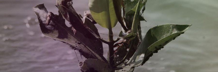"""Film """"Semarang"""" Sabet Penghargaan dari Forest Watch Indonesia"""