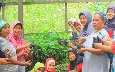 Pelatihan Pembibitan Untuk Konservasi Mangrove Penajam