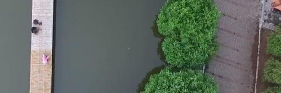 Unduh Data Mangrove